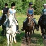 Métiers du cheval