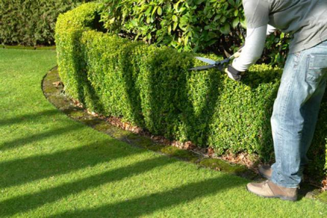 Devenir paysagiste jardinier